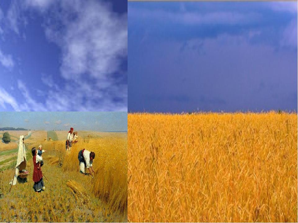 Жовтий колір – це колір пшеничної ниви, зерна, що дає життя всьому сущому на землі. Це ще й колір жовтогарячого сонця, без ласкавих променів якого ...