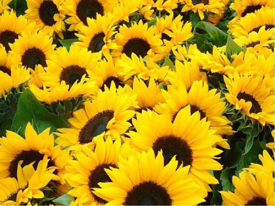 Усюди є небо, і зорі скрізь сяють, І квіти усюди ростуть, Та тільки одну Батьківщину ми маємо – Її Україною звуть.