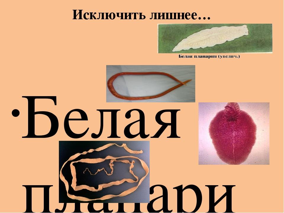 Исключить лишнее… Белая планария Аскарида Печеночный сосальщик Бычий цепень