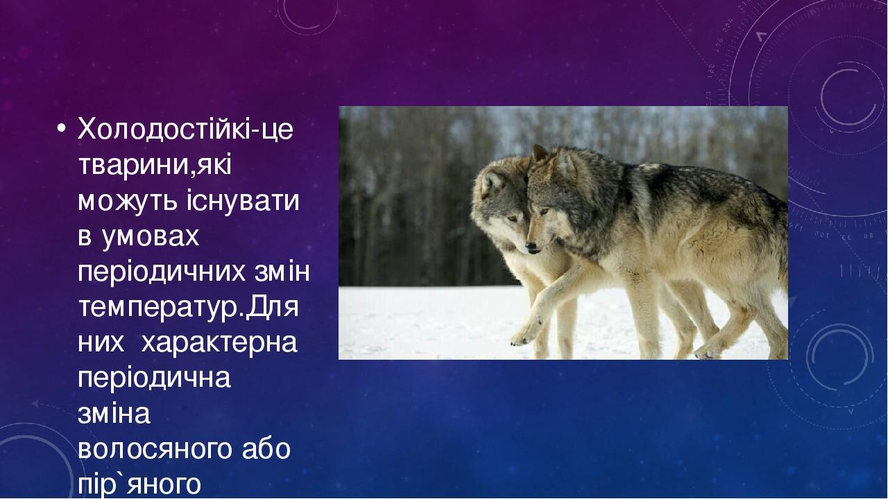 Холодостійкі-це тварини,які можуть існувати в умовах періодичних змін температур.Для них характерна періодична зміна волосяного або пір`яного покри...