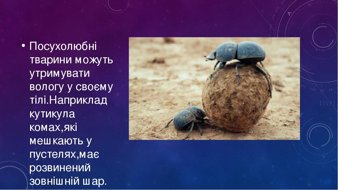 Посухолюбні тварини можуть утримувати вологу у своєму тілі.Наприклад кутикула комах,які мешкають у пустелях,має розвинений зовнішній шар.