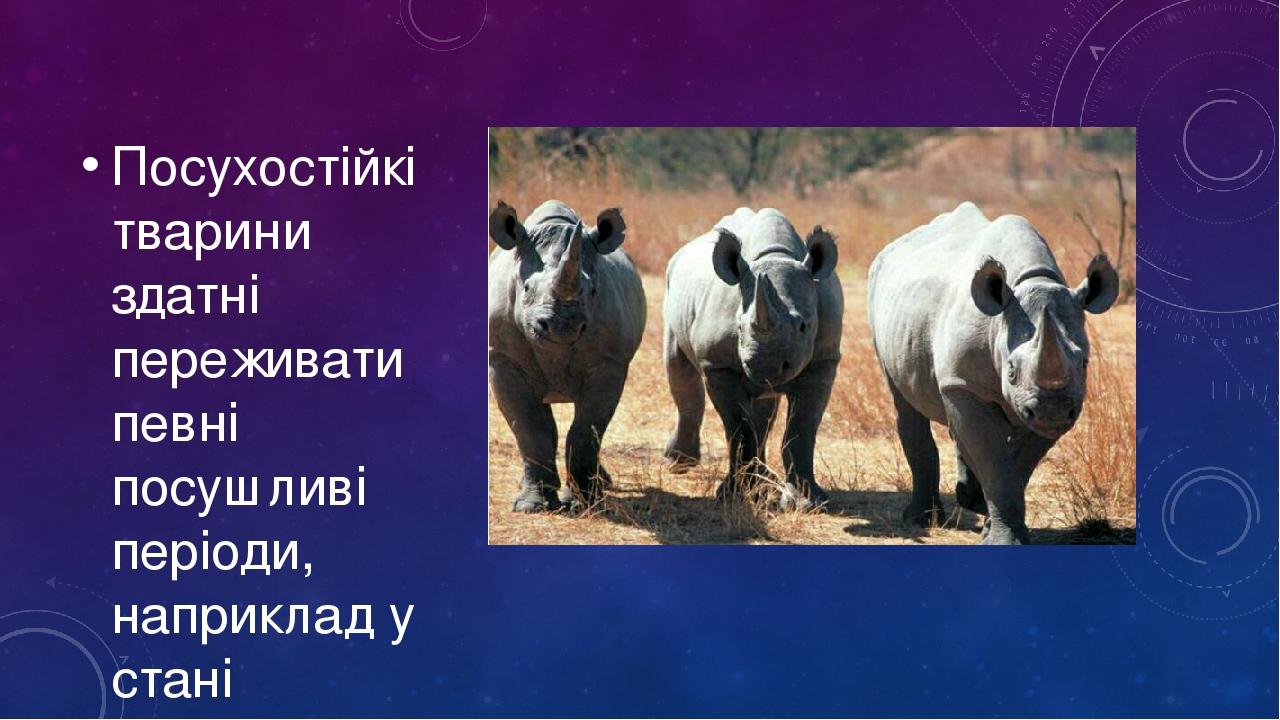 Посухостійкі тварини здатні переживати певні посушливі періоди, наприклад у стані заціпеніння
