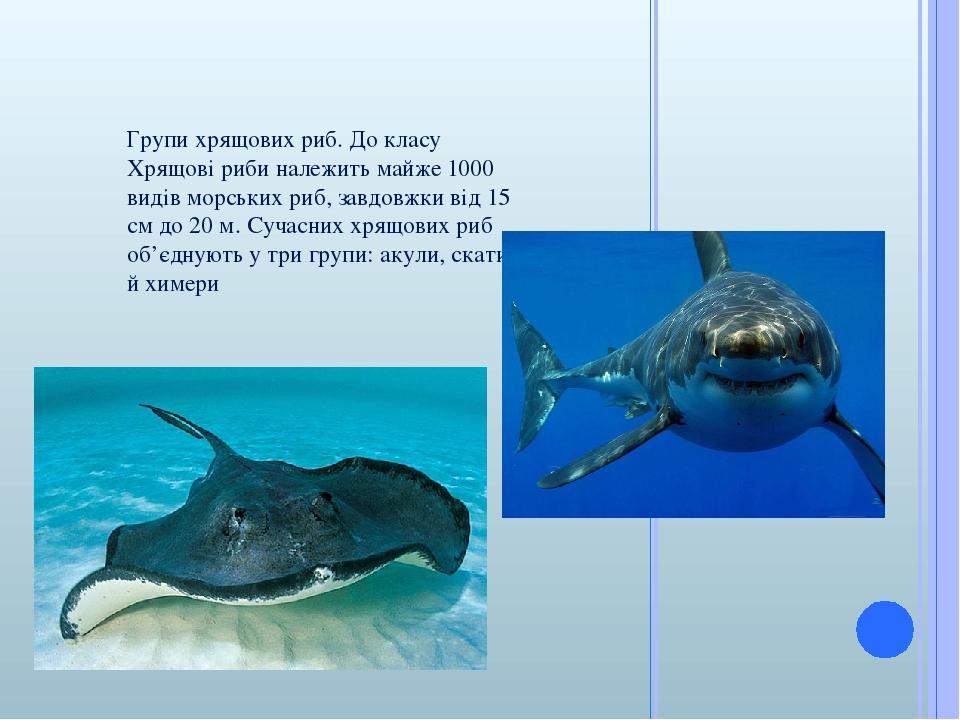 Групи хрящових риб. До класу Хрящові риби належить майже 1000 видів морських риб, завдовжки від 15 см до 20 м. Сучасних хрящових риб об'єднують у т...