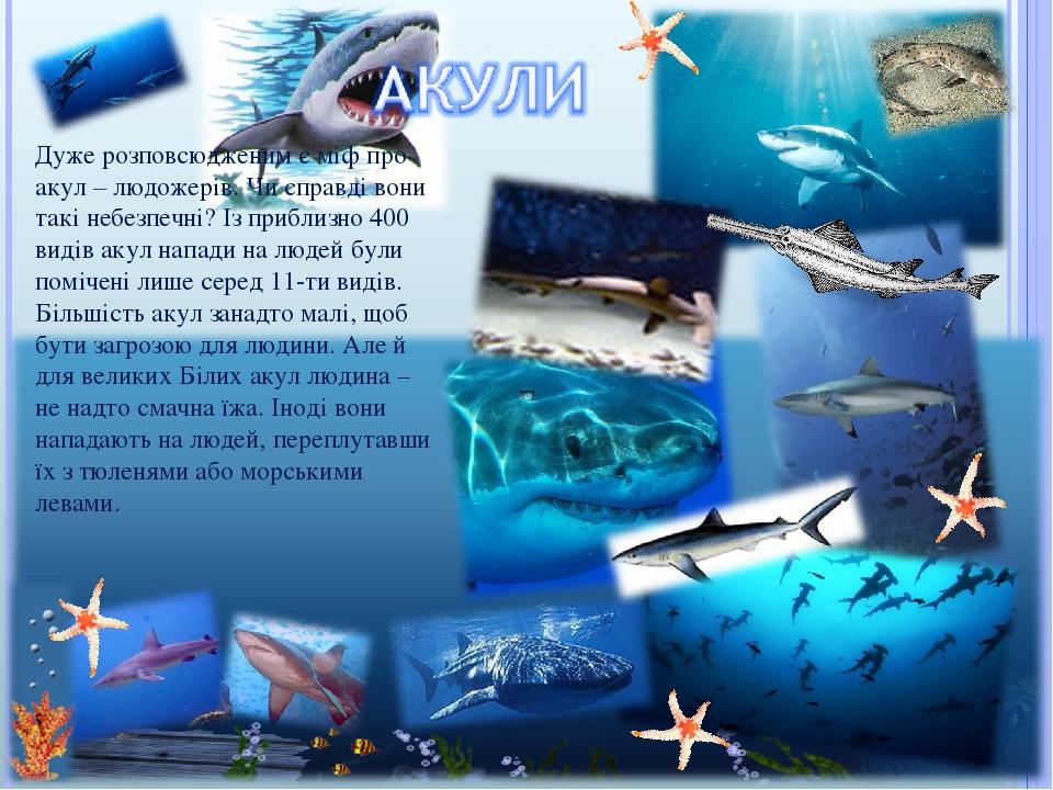 Дуже розповсюдженим є міф про акул – людожерів. Чи справді вони такі небезпечні? Із приблизно 400 видів акул напади на людей були помічені лише сер...