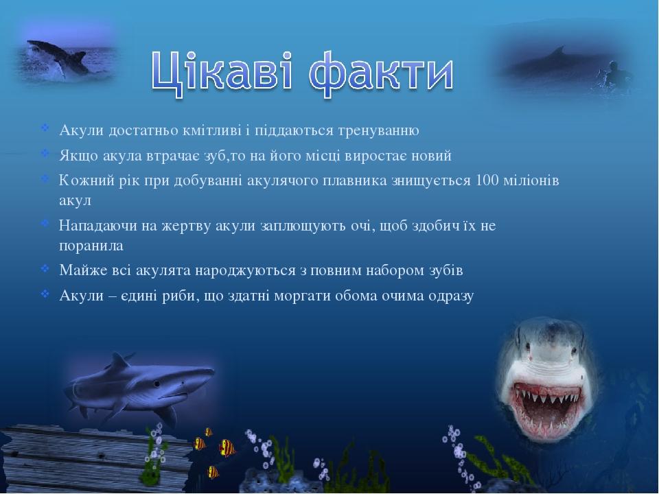Акули достатньо кмітливі і піддаються тренуванню Якщо акула втрачає зуб,то на його місці виростає новий Кожний рік при добуванні акулячого плавника...