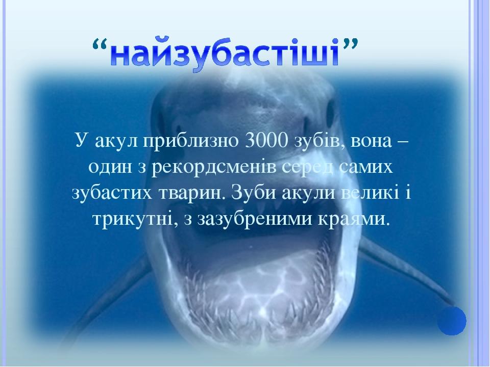 У акул приблизно 3000 зубів, вона – один з рекордсменів серед самих зубастих тварин. Зуби акули великі і трикутні, з зазубреними краями.