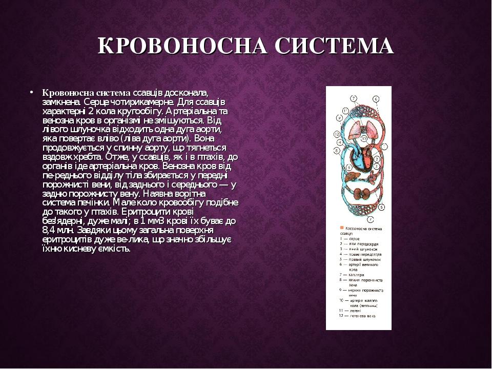 КРОВОНОСНА СИСТЕМА Кровоносна система ссавців досконала, замкнена. Серце чотирикамерне. Для ссавців характерні 2 кола кругообігу. Артеріальна та ве...
