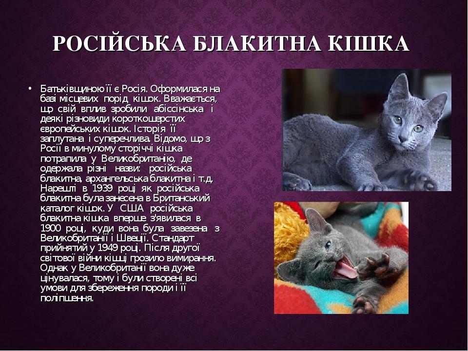 РОСІЙСЬКА БЛАКИТНА КІШКА Батьківщиною її є Росія. Оформилася на базі місцевих порід кішок. Вважається, що свій вплив зробили абіссінська ...