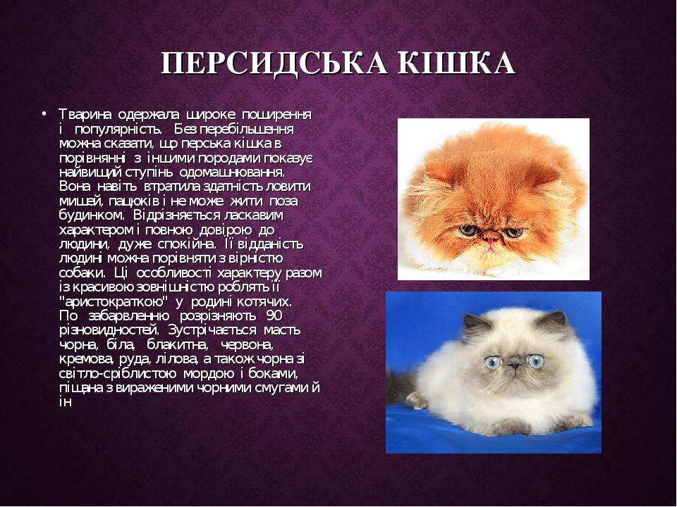 ПЕРСИДСЬКА КІШКА Тварина одержала широке поширення і популярність. Без перебільшення можна сказати, що перська кішка в порівнянні з іншим...