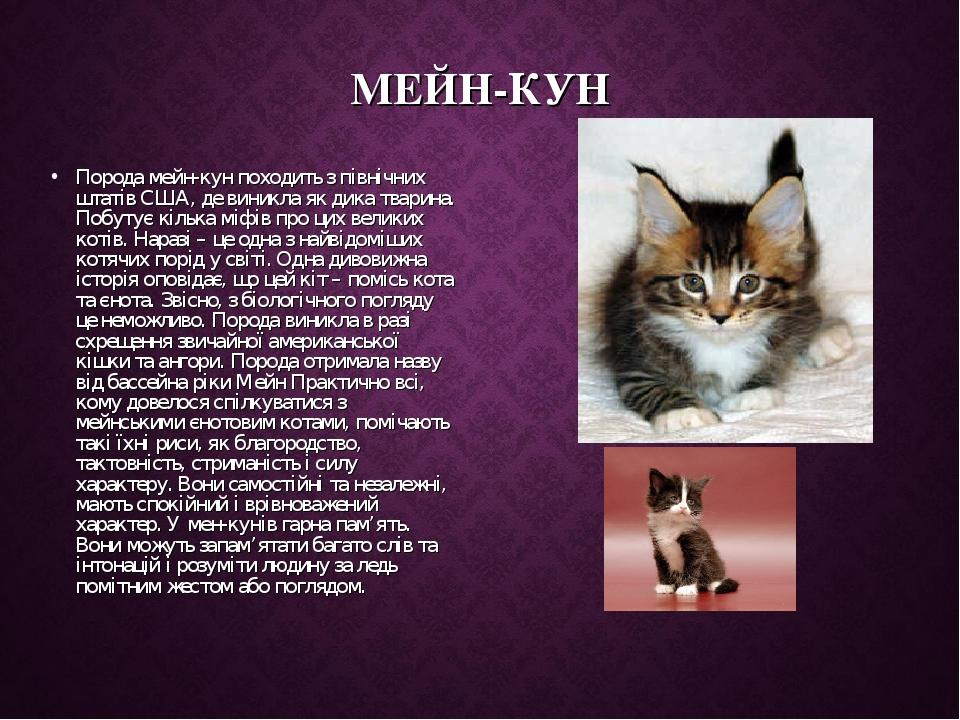 МЕЙН-КУН Порода мейн-кун походить з північних штатів США, де виникла як дика тварина. Побутує кілька міфів про цих великих котів. Наразі – це одна ...