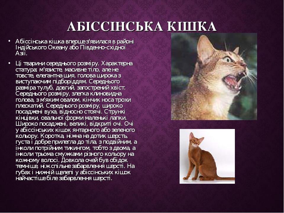 АБІССІНСЬКА КІШКА Абіссінська кішка вперше з'явилася в районі Індійського Океану або Південно-східної Азії. Ці тварини середнього розміру. Характер...