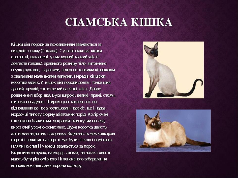 СІАМСЬКА КІШКА Кішки цієї породи за походженням вважаються за вихідців з сіаму (Таїланд). Сучасні сіамські кішки елегантні, витончені, у них довгий...