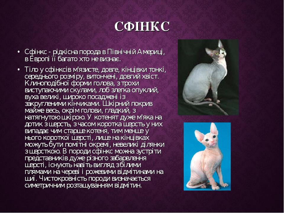 СФІНКС Сфінкс - рідкісна порода в Північній Америці, в Европі її багато хто не визнає. Тіло у сфінксів м'язисте, довге, кінцівки тонкі, середнього ...