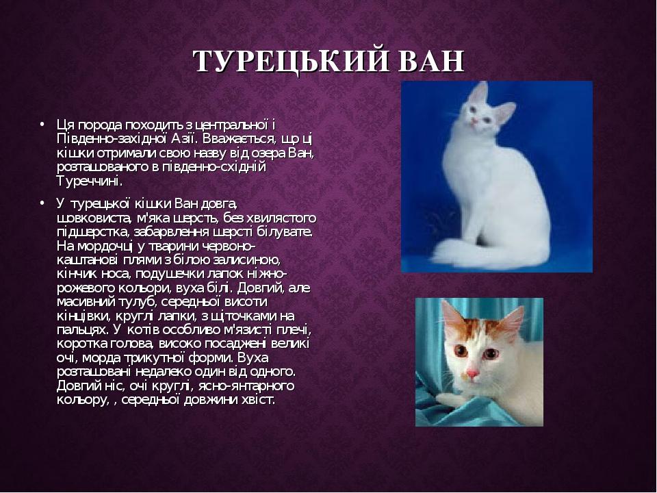 ТУРЕЦЬКИЙ ВАН Ця порода походить з центральної і Південно-західної Азії. Вважається, що ці кішки отримали свою назву від озера Ван, розташованого в...