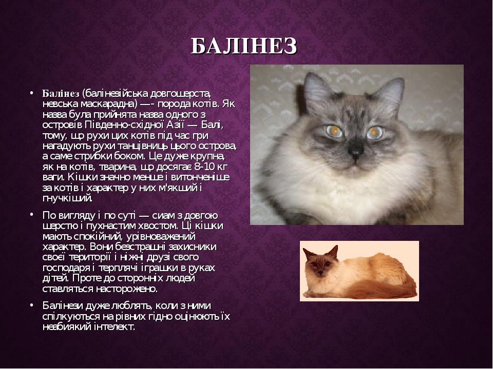БАЛІНЕЗ Балінез (балінезійська довгошерста, невська маскарадна) —- порода котів. Як назва була прийнята назва одного з островів Південно-східної Аз...