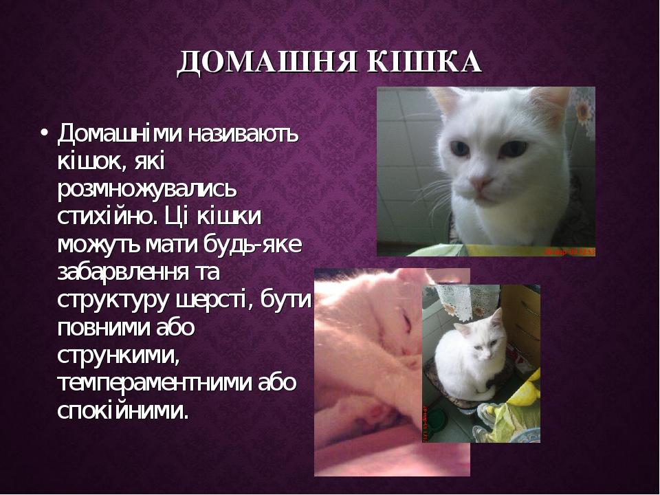 ДОМАШНЯ КІШКА Домашніми називають кішок, які розмножувались стихійно. Ці кішки можуть мати будь-яке забарвлення та структуру шерсті, бути повними а...