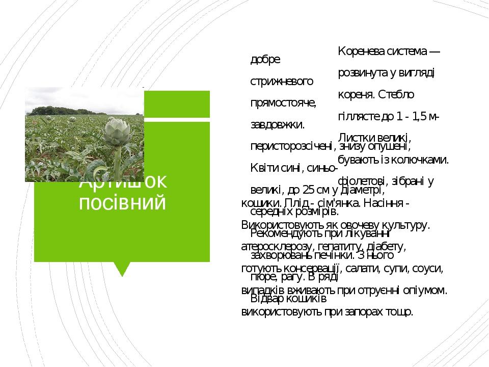 Артишок посівний Коренева система —добре розвинута у вигляді стрижневого кореня. Стебло прямостояче, гіллясте до 1 - 1,5 м- завдовжки. Листки велик...