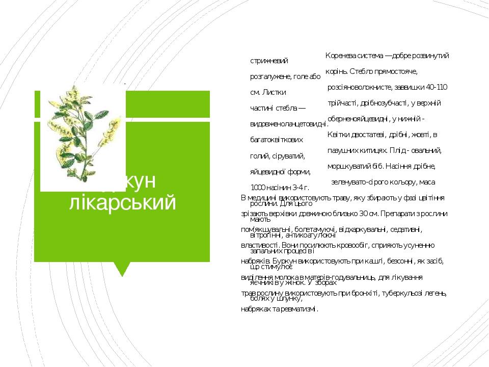 Буркун лікарський Коренева система —добре розвинутий стрижневий корінь. Стебло прямостояче, розгалужене, голе або розсіяноволокнисте, заввишки 40-1...