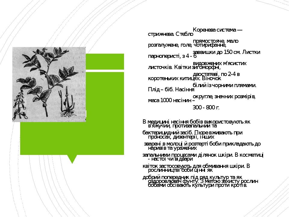 Боби Коренева система — стрижнева. Стебло прямостояче, мало розгалужене, голе, чотирифанне, заввишки до 150 см. Листки парноперисті, з 4 - 6 видовж...