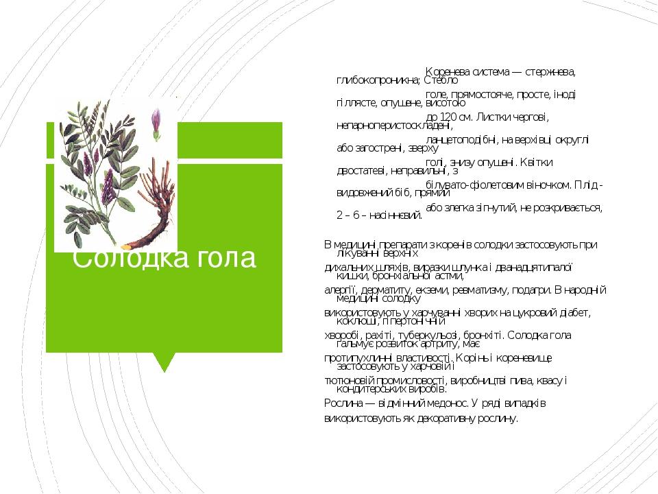 Солодка гола Коренева система — стержнева, глибокопроникна; Стебло голе, прямостояче, просте, іноді гіллясте, опушене, висотою до 120 см. Листки че...