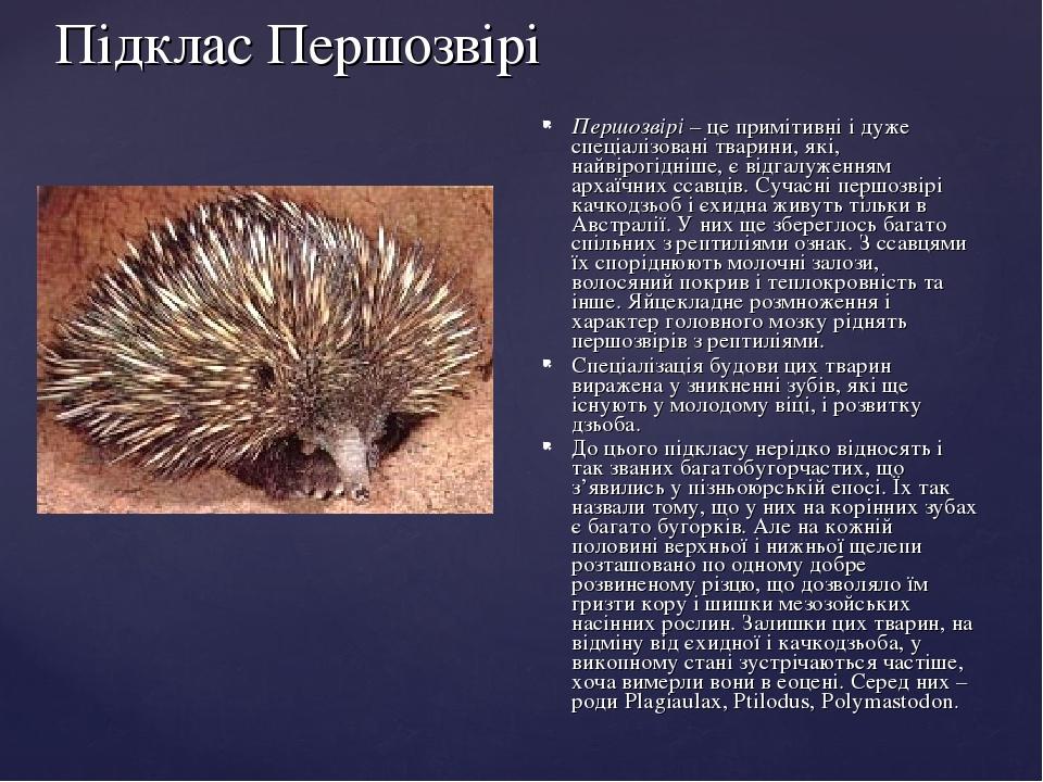Підклас Першозвірі Першозвірі– це примітивні і дуже спеціалізовані тварини, які, найвірогідніше, є відгалуженням архаїчних ссавців. Сучасні першоз...