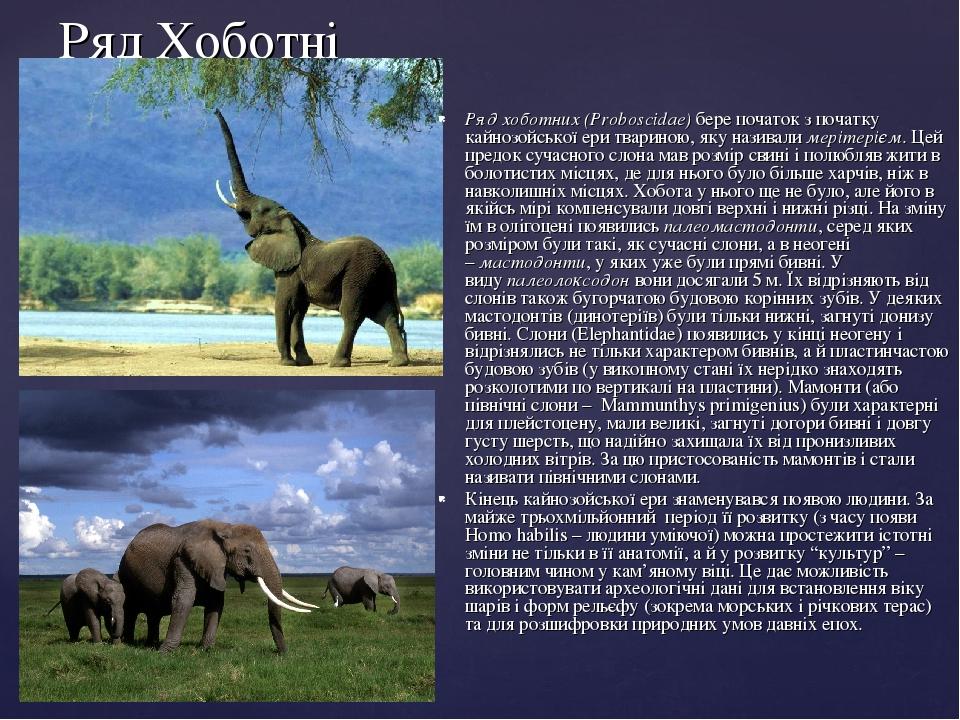 Ряд Хоботні Ряд хоботних (Proboscidae)бере початок з початку кайнозойської ери твариною, яку називалимерітерієм. Цей предок сучасного слона мав р...