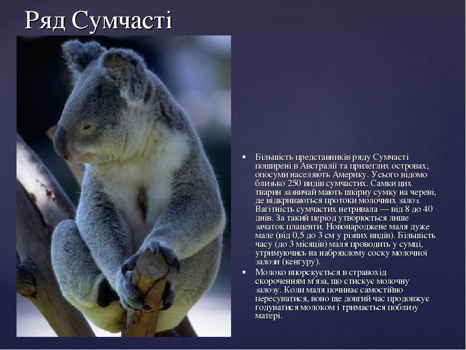 Ряд Сумчасті Більшість представників ряду Сумчасті поширені в Австралії та прилеглих островах; опосуми населяють Америку. Усього відомо близько 250...