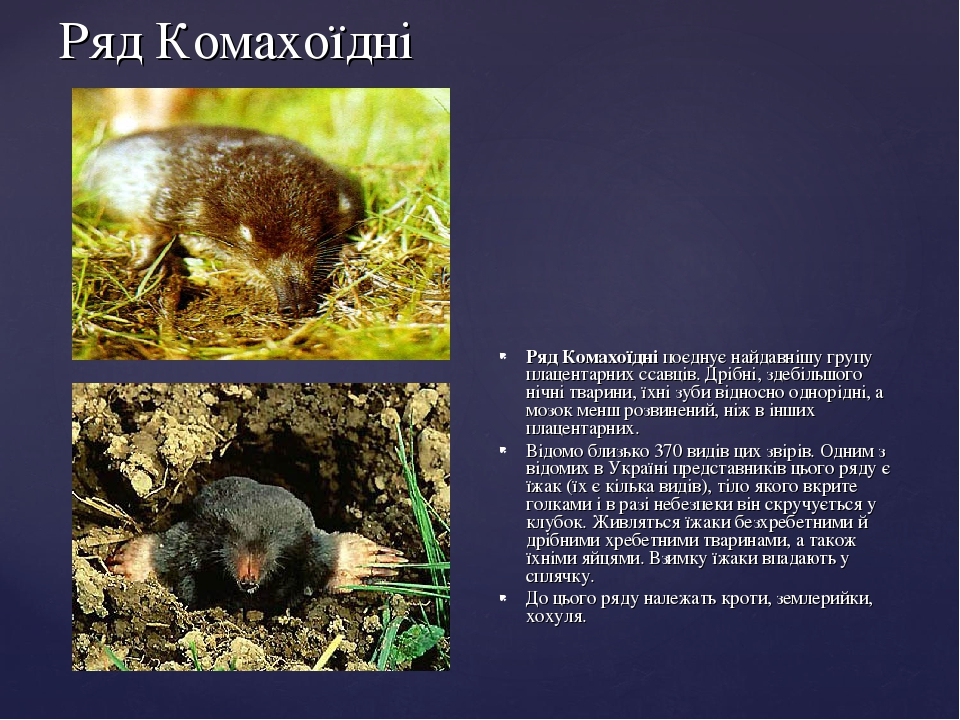 Ряд Комахоїдні Ряд Комахоїдні поєднує найдавнішу групу плацентарних ссавців. Дрібні, здебільшого нічні тварини, їхні зуби відносно однорідні, а моз...