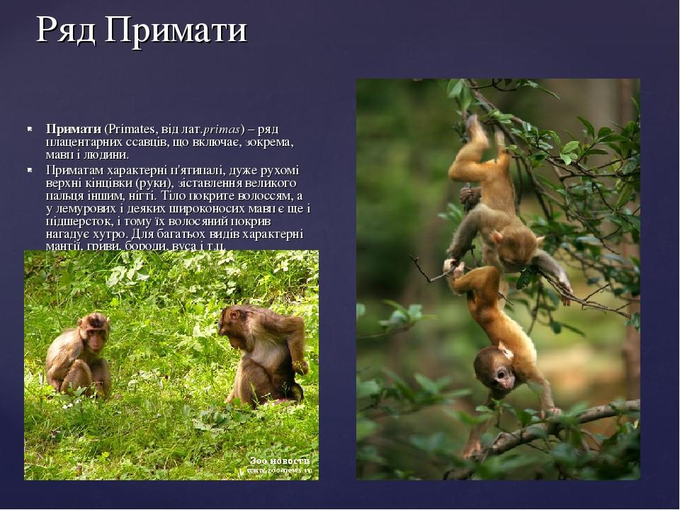 Ряд Примати Примати (Primates, від лат.primas) – ряд плацентарних ссавців, що включає, зокрема, мавп і людини. Приматам характерні п'ятипалі, дуже ...