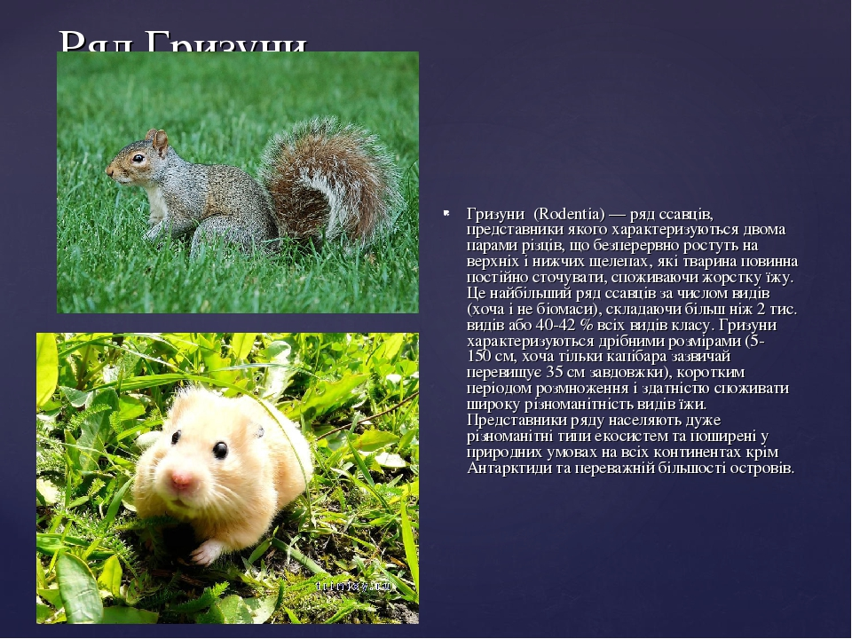 Ряд Гризуни Гризуни́ (Rodentia)— ряд ссавців, представники якого характеризуються двома парами різців, що безперервно ростуть на верхніх і нижчих ...
