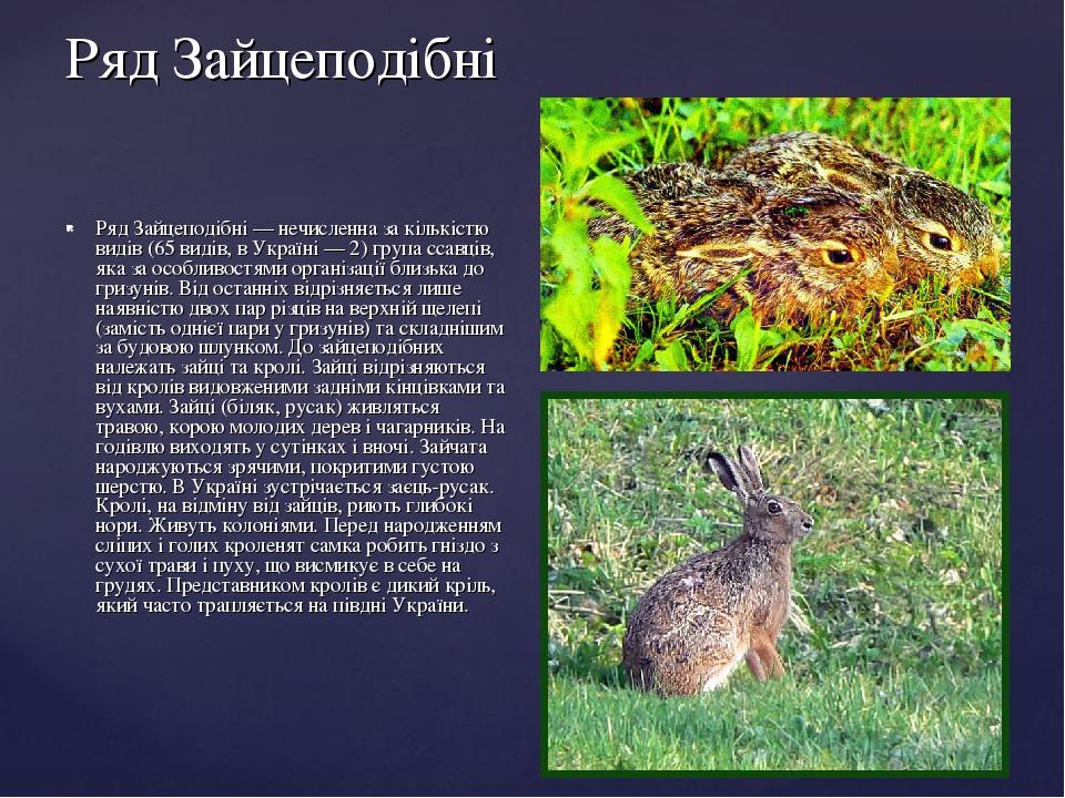 Ряд Зайцеподібні Ряд Зайцеподібні — нечисленна за кількістю видів (65 видів, в Україні — 2) група ссавців, яка за особливостями організації близька...