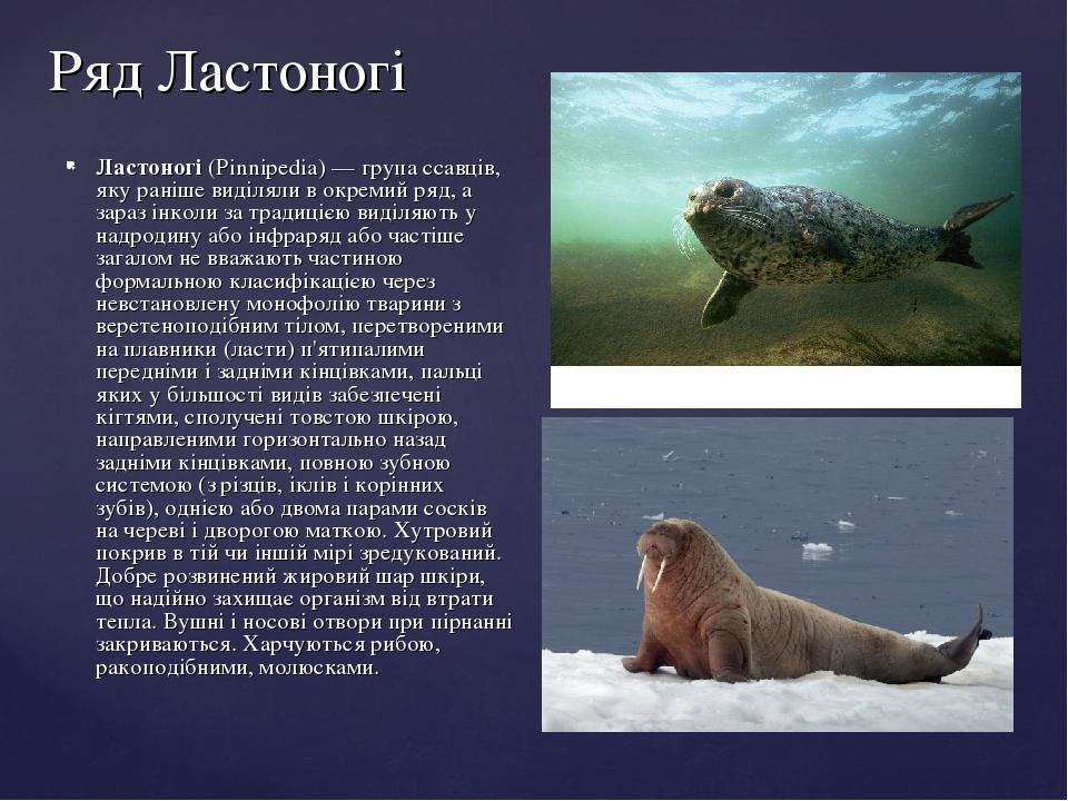 Ряд Ластоногі Ластоногі (Pinnipedia)— група ссавців, яку раніше виділяли в окремий ряд, а зараз інколи за традицією виділяють у надродину або інфр...