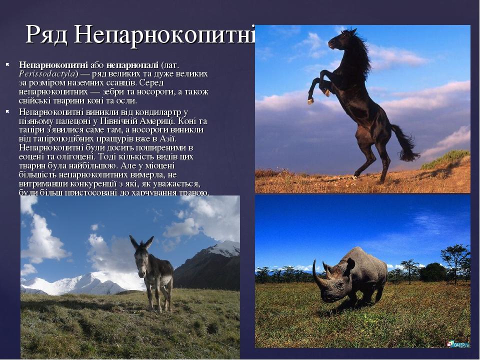 Ряд Непарнокопитні Непарнокопитні або непарнопалі (лат. Perissodactyla) — ряд великих та дуже великих за розміром наземних ссавців. Серед непарноко...