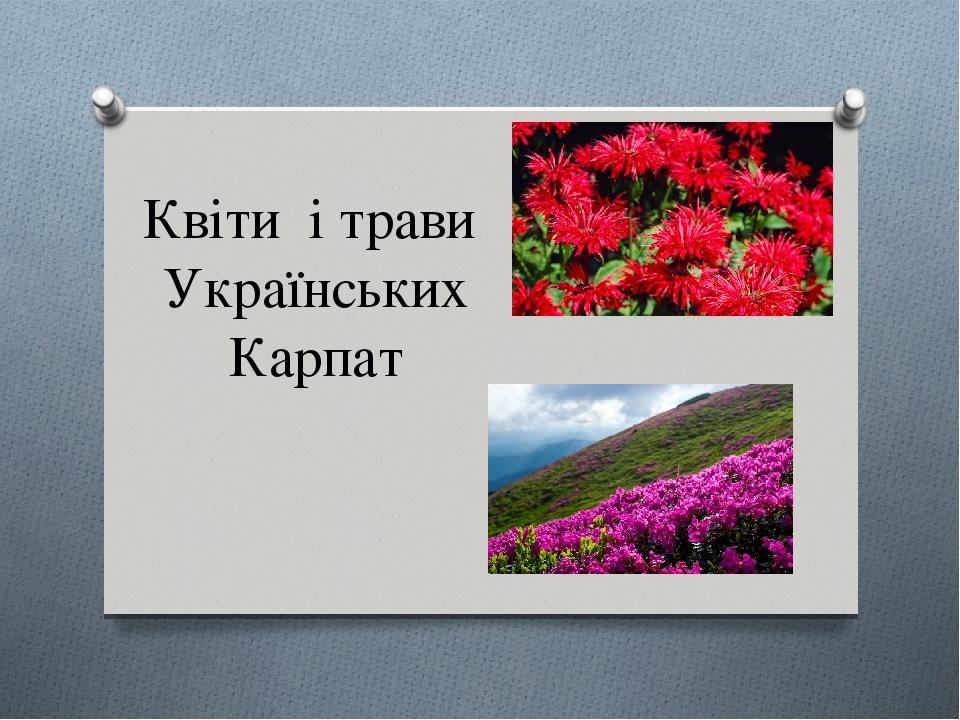 Квіти і трави Українських Карпат