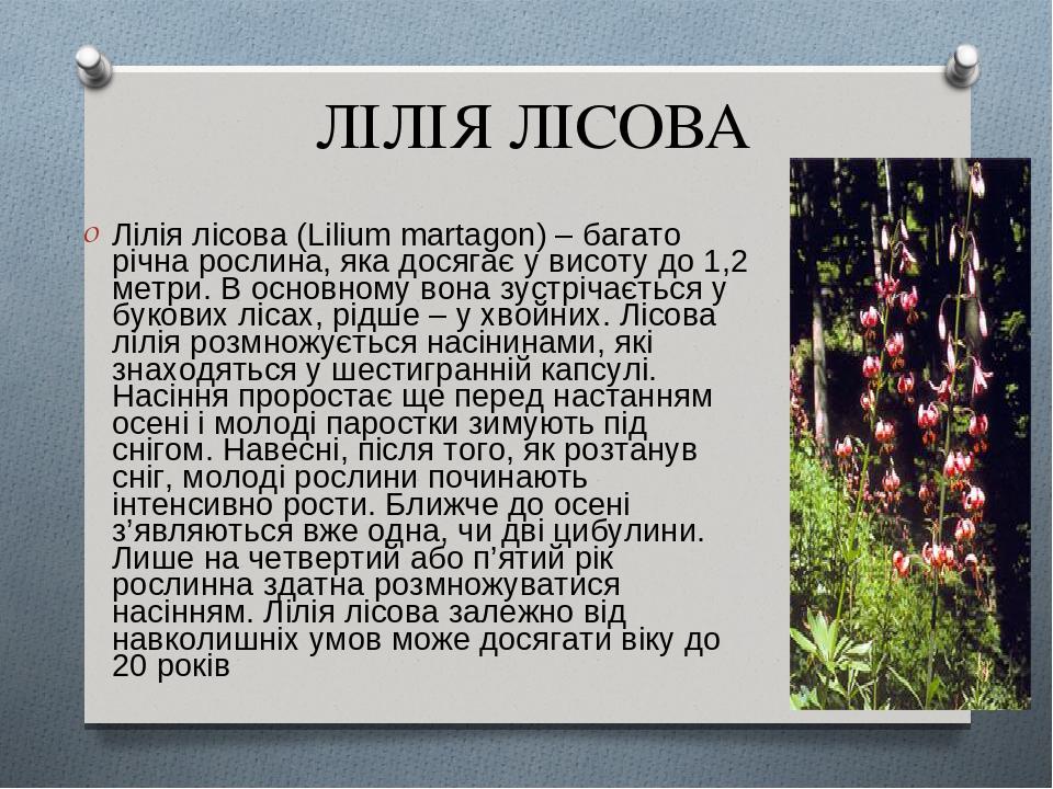 ЛІЛІЯ ЛІСОВА Лілія лісова (Lilium martagon) – багато річна рослина, яка досягає у висоту до 1,2 метри. В основному вона зустрічається у букових ліс...