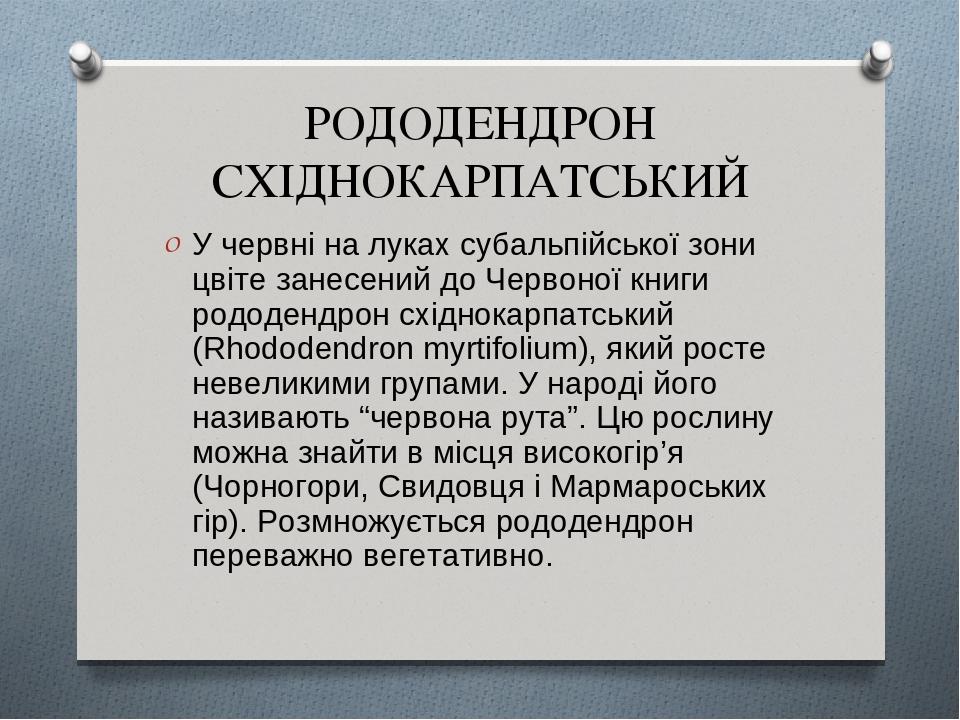 РОДОДЕНДРОН СХІДНОКАРПАТСЬКИЙ У червні на луках субальпійської зони цвіте занесений до Червоної книги рододендрон східнокарпатський (Rhododendron m...