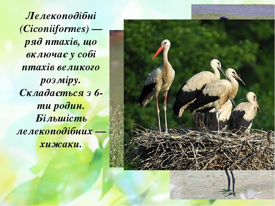 Лелекоподібні (Ciconiiformes) — ряд птахів, що включає у собі птахів великого розміру. Складається з 6-ти родин. Більшість лелекоподібних — хижаки.