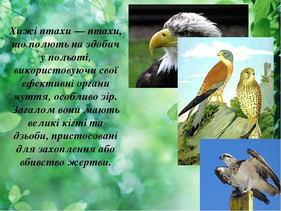 Хижі птахи — птахи, що полють на здобич у польоті, використовуючи свої ефективні органи чуття, особливо зір. Загалом вони мають великі кігті та дзь...