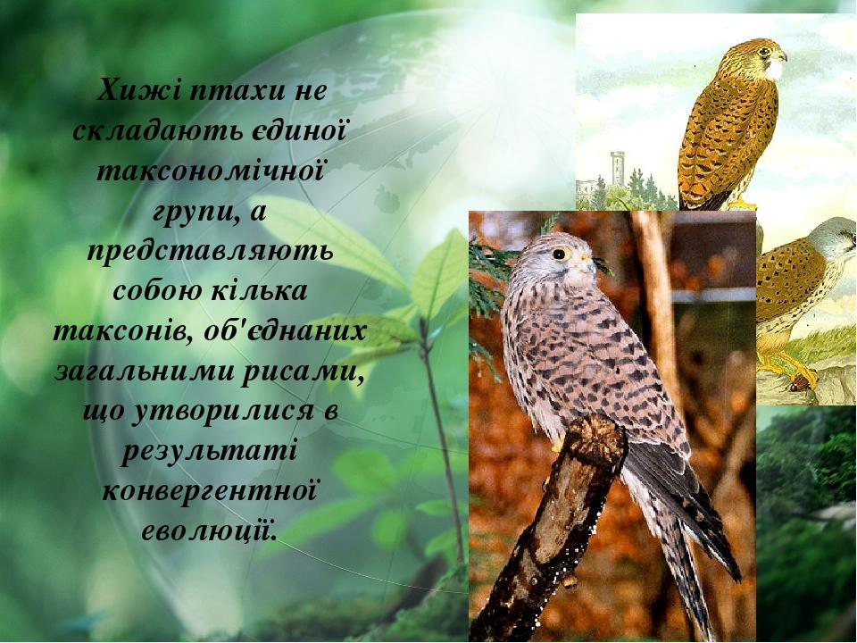 Хижі птахи не складають єдиної таксономічної групи, а представляють собою кілька таксонів, об'єднаних загальними рисами, що утворилися в результаті...
