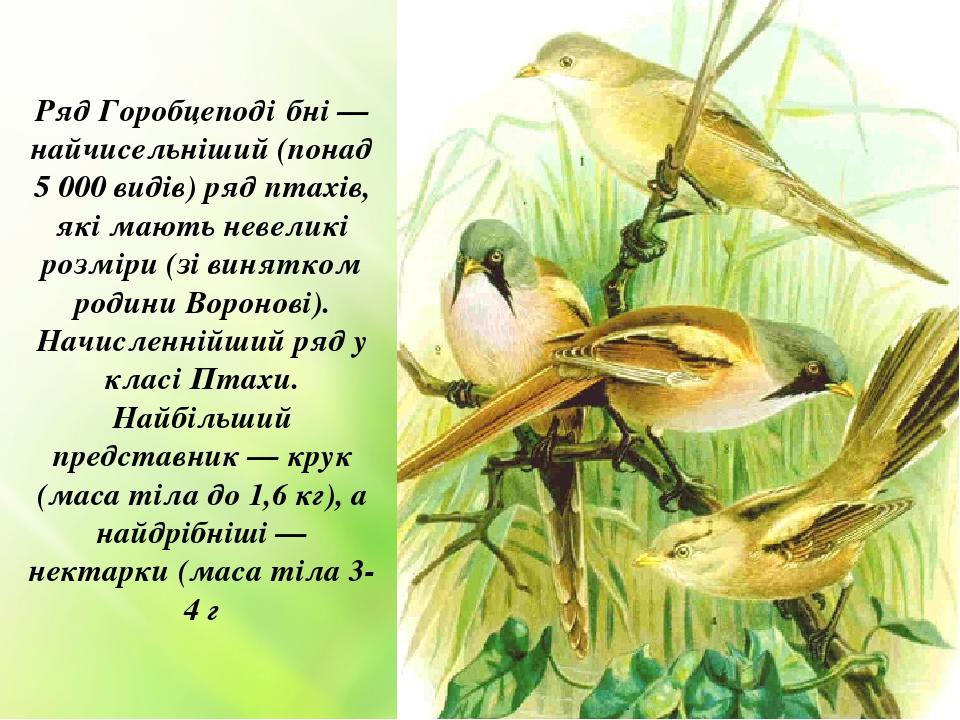 Ряд Горобцеподі́бні — найчисельніший (понад 5 000 видів) ряд птахів, які мають невеликі розміри (зі винятком родини Воронові). Начисленнійший ряд у...