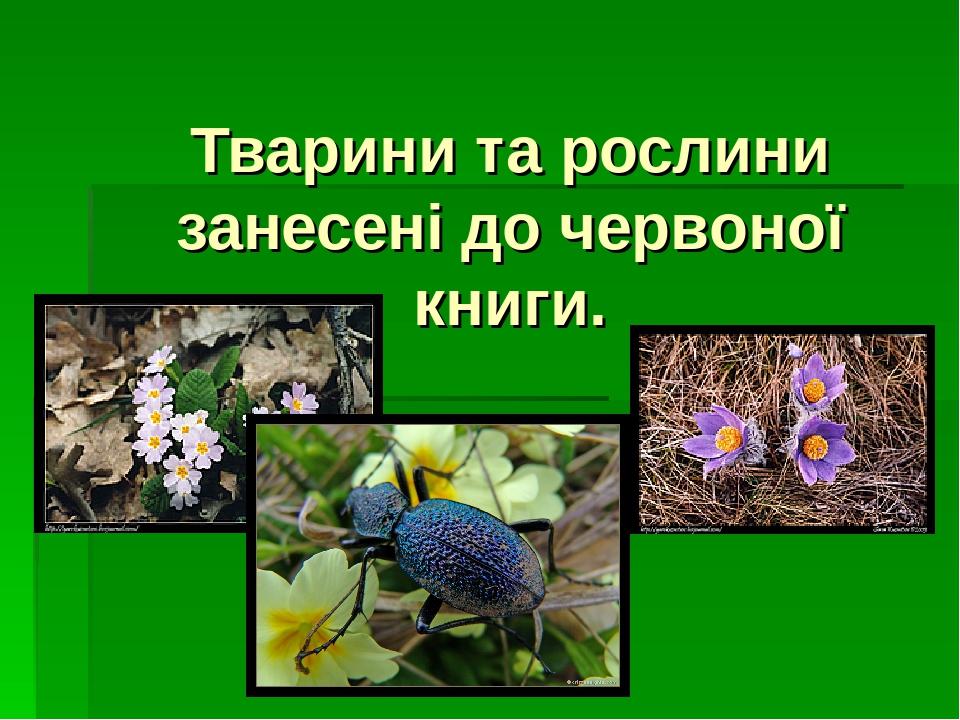Тварини та рослини занесені до червоної книги.