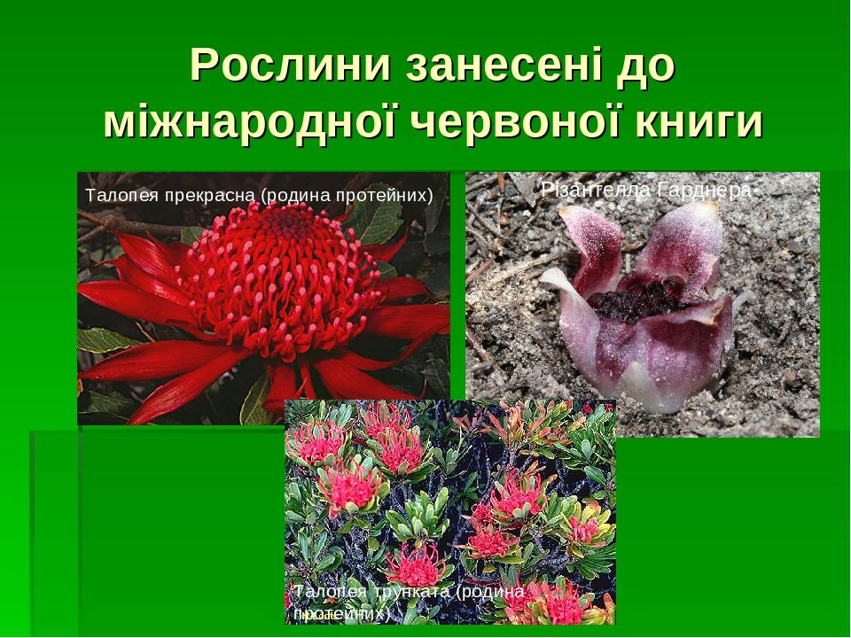 Рослини занесені до міжнародної червоної книги Талопея прекрасна (родина протейних) Талопея трунката (родина протейних) Різантелла Гарднера