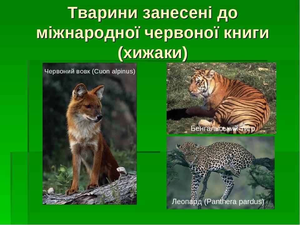 Тварини занесені до міжнародної червоної книги (хижаки) Червоний вовк (Cuon alpinus) Леопард (Panthera pardus) Бенгальський тигр