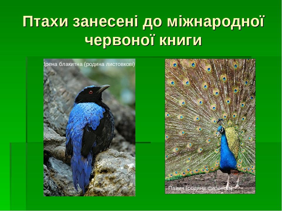 Птахи занесені до міжнародної червоної книги Ірена блакитна (родина листовкові) Павич (родина фазанові)