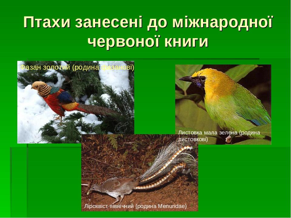 Птахи занесені до міжнародної червоної книги Лірохвіст північний (родина Menuridae) Фазан золотий (родина фазанові) Листовка мала зелена (родина ли...