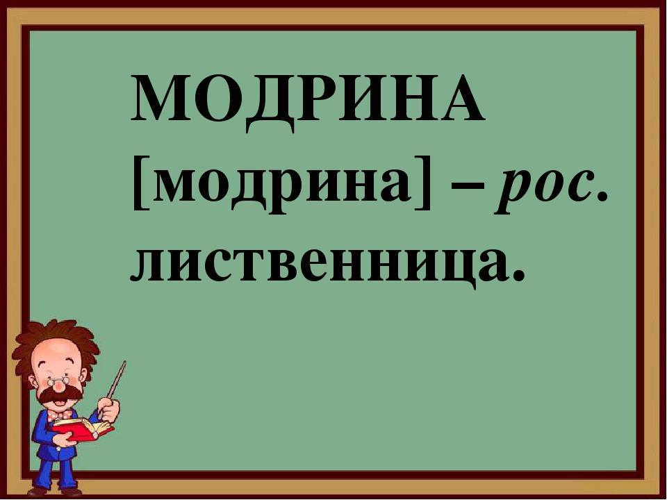 МОДРИНА [модрина] – рос. лиственница.