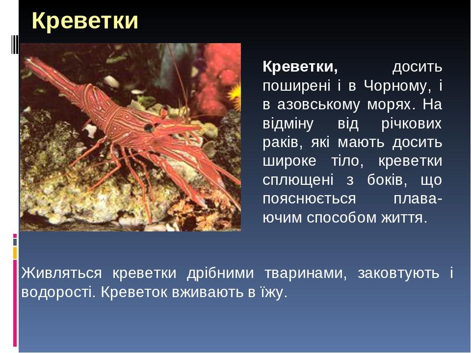 Живляться креветки дрібними тваринами, заковтують і водорості. Креветок вживають в їжу. Креветки Креветки, досить поширені і в Чорному, і в азовськ...