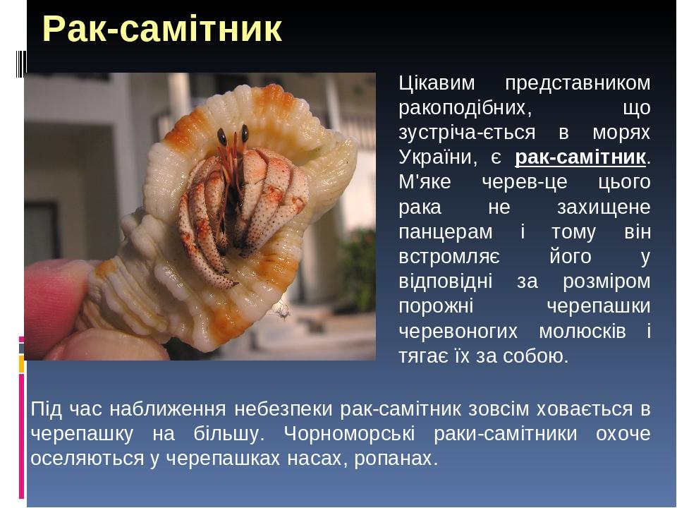 Рак-самітник Цікавим представником ракоподібних, що зустріча-ється в морях України, є рак-самітник. М'яке черев-це цього рака не захищене панцерам ...