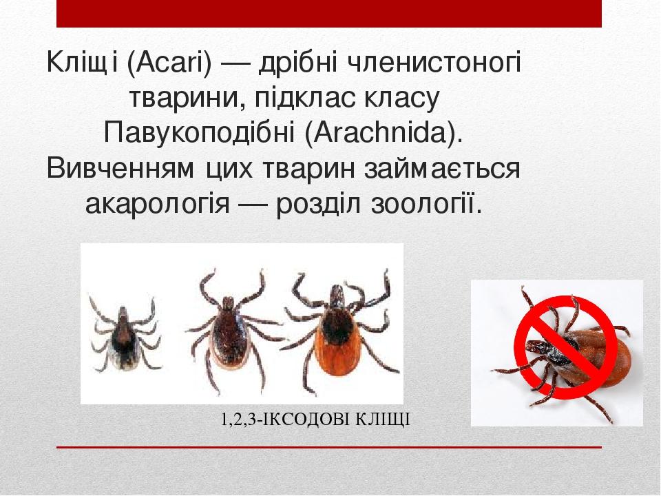 Кліщі (Acari) — дрібні членистоногі тварини, підклас класу Павукоподібні (Arachnida). Вивченням цих тварин займається акарологія — розділ зоології....