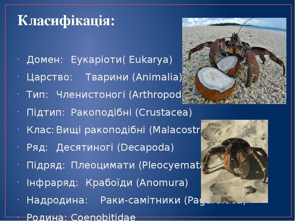 Класифікація: Домен: Еукаріоти( Eukarya) Царство: Тварини (Animalia) Тип: Членистоногі (Arthropoda) Підтип: Ракоподібні (Crustacea) Клас: Вищі рако...